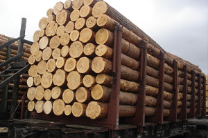 Экспорт нелегальной древесины в Китай